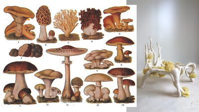 Image: Diagrams of mushrooms