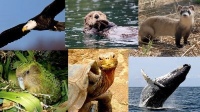 Image: Collage of species saves from extinction.