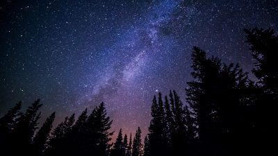 Image: Stars of the milky way at night above a forest