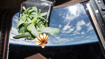 Image: Plant floating in the International Space Station Above Earth