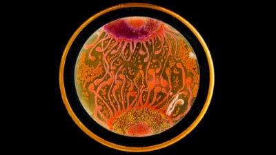 image: a petri dish growing colorful bacteria
