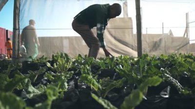 Image: Lufefe Nomjana farming spinach