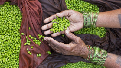 Image:Hands of bean and peas seller, Varanasi Benares India
