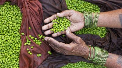 Image:Hands of bean and peas seller, Varanasi Benares India